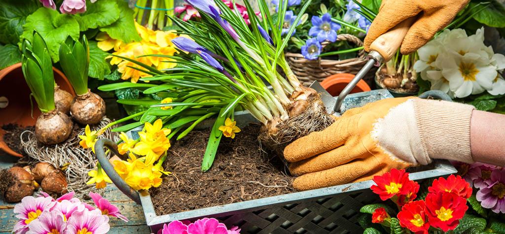Gardening, single parent, single parenthood, activities, single mom, chanelle dupre